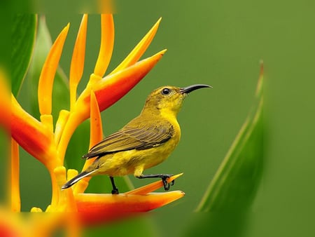 ......... Bird............. - yellow, green, bird, animals, nature, flower