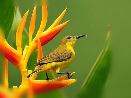 ......... Bird............. - animals, green, nature, bird, flower, yellow