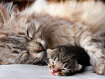 Baby Cat with her mother