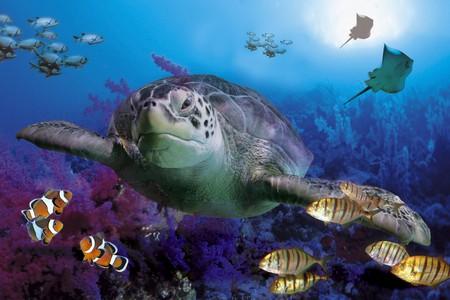 MARINE LIFE - marine, sea, life, turtle, 3d