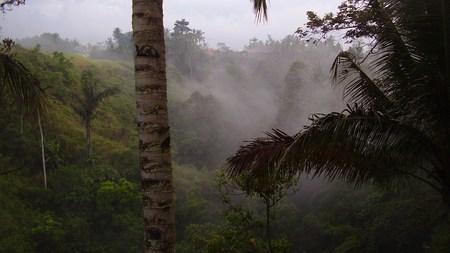 Morning Mist - beautiful, rainforest, green, mist, mountain