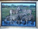 The Zebra's