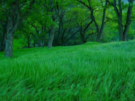 Nature intense greengrass - green, strong, grass, nature