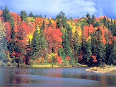 Autumn Raiment - colorful, autumn, leaves, lake