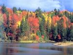 Autumn Raiment
