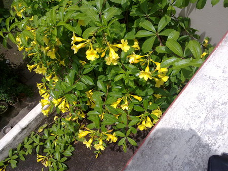 yellow flowers.. - leaves, green, flowers, yellow, spring