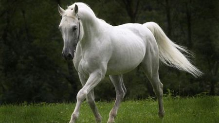 White horse - green, black, horse, white