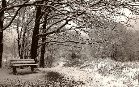 Winter - woods, beautiful, magic, cold, splendor, path, beauty, way, forest, lovely, view, bench, winter time, trees, winter, snow, peaceful, nature, white, frozen