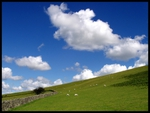 blue sky and sheep