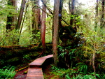 British Columbia - Vancouver Island - Rainforest 3