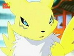 Renamon looks at you