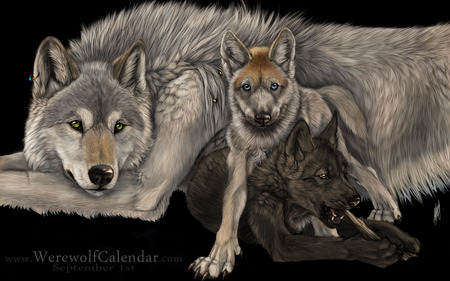 LOKI THIS ONES FOR YOU MY FRIEND - wolves, beautiful, photo, gorgeous