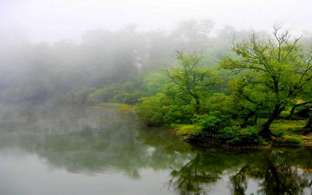 MISTY LAKE - mist, shadow, fog, green, trees, lake, reflections