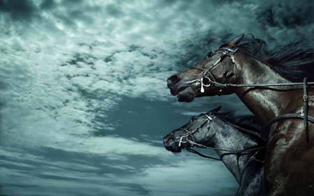 CHASE THE CLOUDS - stallions, skies, horses, clouds, running, black