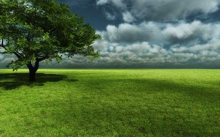 Endless Green - grass, storm, dark clouds, field, green, tree, nature