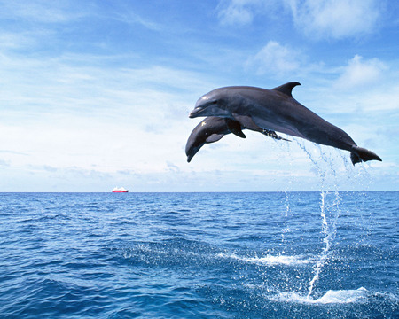 Image of: Exotic Dolphins Cool Amazing Nice Fish Sea Animal Wallpapers Desktop Nexus Dolphins Cool Fish Animals Background Wallpapers On Desktop