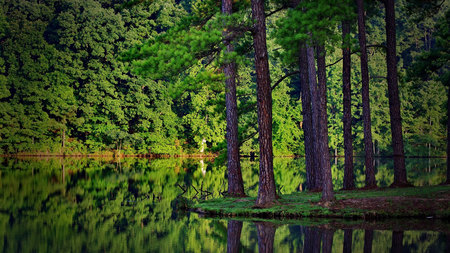 Beautiful Forest - water, forest, green, rainforest, trees, reflection, nature