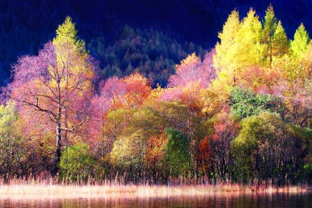 Scottish beauty - scotland, colors, pink, trees, coral, nature, yellow, forest, pretty, thres, multicolored, green