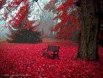 Red Autum