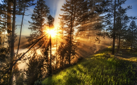 Sunrise - sun, grass, woods, sunny, viewbeautiful, beautiful, sunset, blue skies, splendor, green, people, beauty, sunrise, forests, hill, light, wood, blue, forest, view, sunlight, colors, sky, trees, mist, tree, rays, entertainment, peaceful, sunshine, nature, landscape