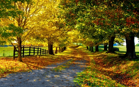 autumn-road - autumn, grass, road, wonderful, tree, path, shade, trees, fall, red, fence, leaves