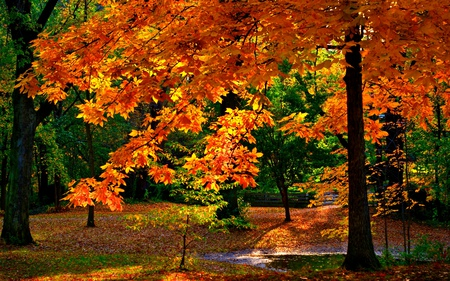 Autumn Colors - beauty, lovely, woods, colorful, park, forest, wood, branches, rest, shine, green, red, beautiful, trees, walk, nature, sunny, peaceful, path, autumn colors, glow, water, fall, sunlight, colours, autumn, view, colors, rays, leaves, splendor