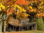 Falling Down in Fall