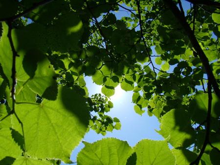 A Game of Light - light, sun, leaves, sky