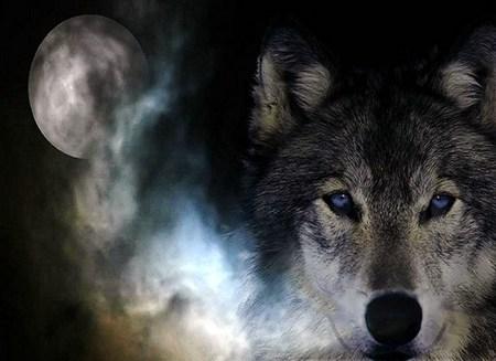 Wild Spirit Wolf Other Animals Background Wallpapers On