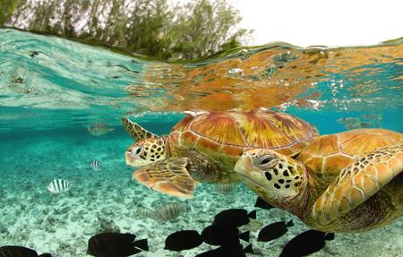 Sea Turtles Other Animals Background Wallpapers On Desktop Nexus Image 443697