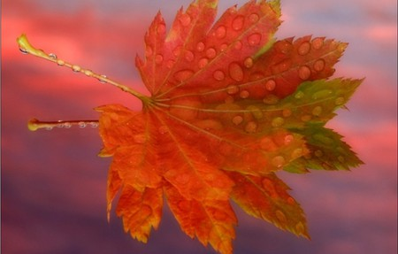 red leaf - red, fall, autumn, beautifull, leaf