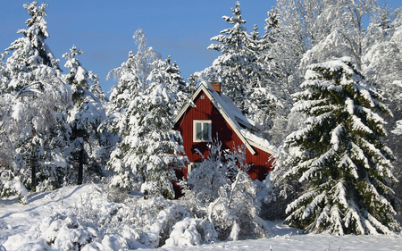 Winter - peaceful, white, winter time, splendor, sky, trees, nature, red, beautiful, snow, winter, red house, cottage, house, view, landscape