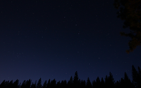 Nature's Nightlights - stars, clear, sky, night, forest, nature, skies