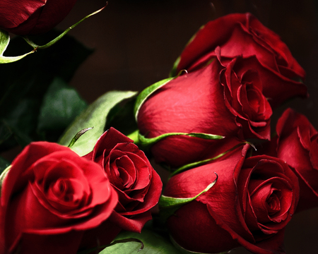 red roses - red, rose, beautiful, dn, thorns, nice, bunch, love, flowers, friends, romance, sexy, gift, roses, cool, bouquet, flower, petals