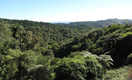 Rain Forest View - clear, rainforest, hills, sky, green, nature, rolling