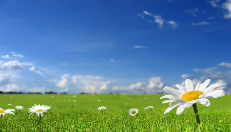 Field Of Daisies - peaceful, yellow, flowers, clouds, white, daisy, pretty, grass, sky, green, beautiful, field, daisies, nature
