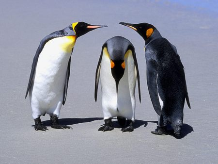 penguins - baby, talking, penguin, penguins