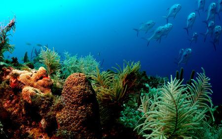 Ocean Life - ocean, fish, coral, sea, under water