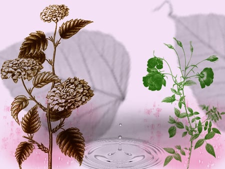 dream of pink - water, pink, plants, leaf