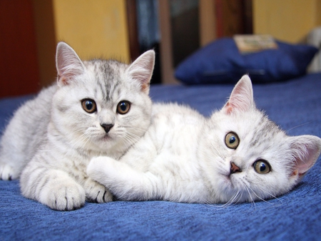 Lovely Cats - Cats & Animals Background Wallpapers on ...