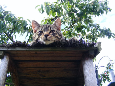 I'm up here!! - roof, cat, trees, high
