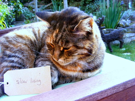 My Silver Lining! - sunshine, tag, cat, love
