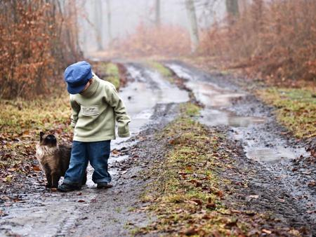 Can we Go Home Boss ? - way, little, boy, forest, cat