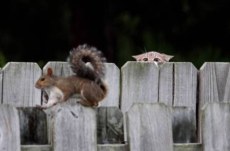 Sneaking suspicion - squirrell, cat, animals, sneaking