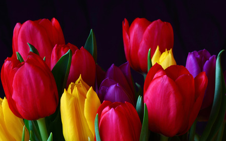 Tulips - beauty, lovely, colorful, yellow, flowers, spring, yellow tulip, pretty, tulips, yellow tulips, green, red, beautiful, colourful, purple tulip, purple tulips, nature, pink, red tulips, purple, flower, still life, red tulip, colorful tulips, colors, petal, photography, tulip