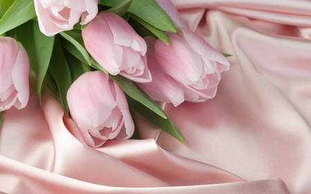 Pink Tulips - hd, satin, photography, pink, flower, tulip, soft colour, flowers, silk, best, tulips, petals, nature, beauty, bouquet, beautiful, lovely, pink tulips, wallpapers, pretty, still life, petal, delicate