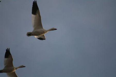 birds - animal, autumn, animals, sky