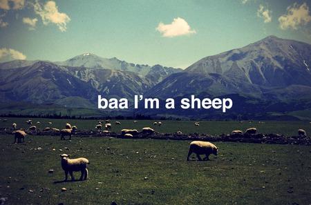 apparently he's a sheep - sods, hes, sheep, she, scary, a, or, baa