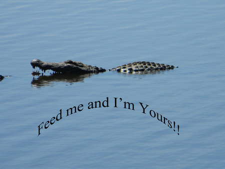 Feed me and I'm yours - mississippi, gators, reptiles, alligators, lake
