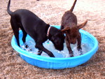 DOGS COOLING OFF
